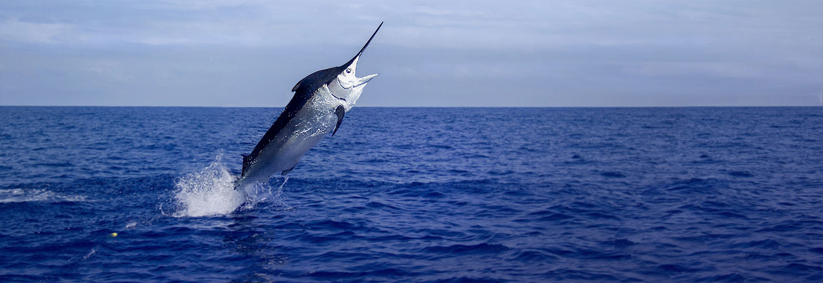 Natal Deep Sea Angling Association